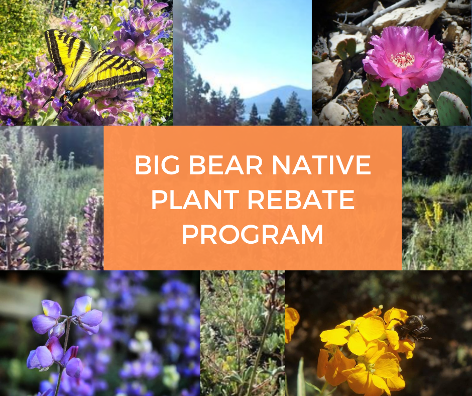 Native Plant Rebate Program